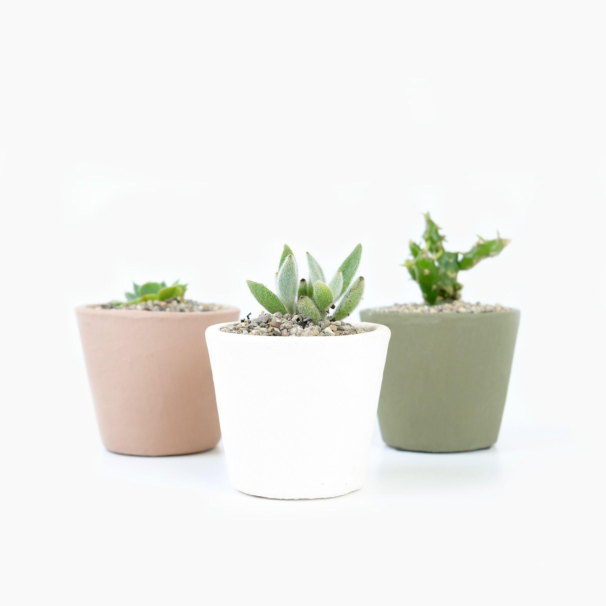 serax cactus vase of serax stoneware flower pots nude nz stockist shop online within serax stoneware flower pots nude