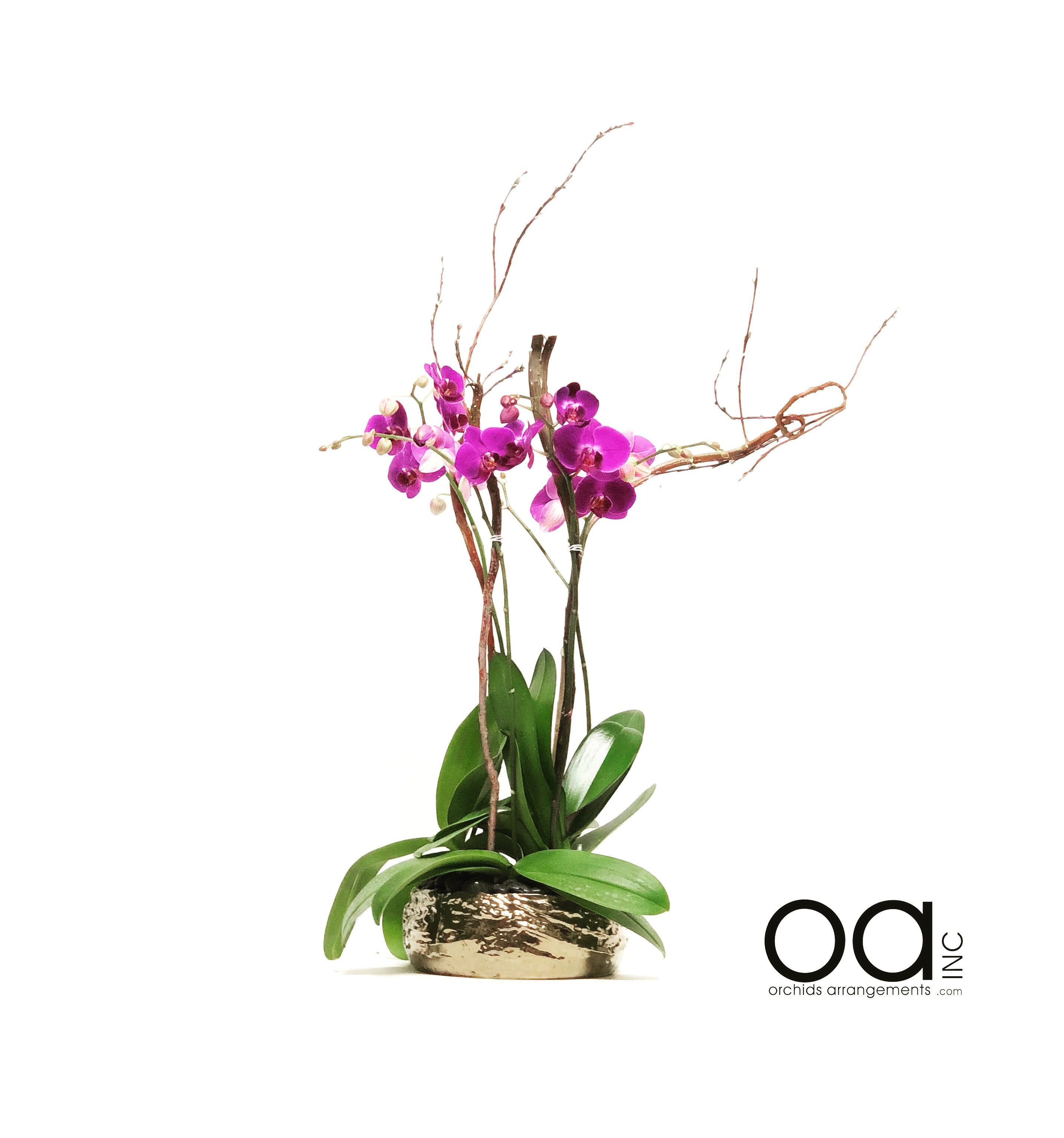 silver vase orchid care of orchid in glass vase awesome send 4 orchids arrangement hollywood pertaining to orchid in glass vase awesome send 4 orchids arrangement hollywood bowl collection
