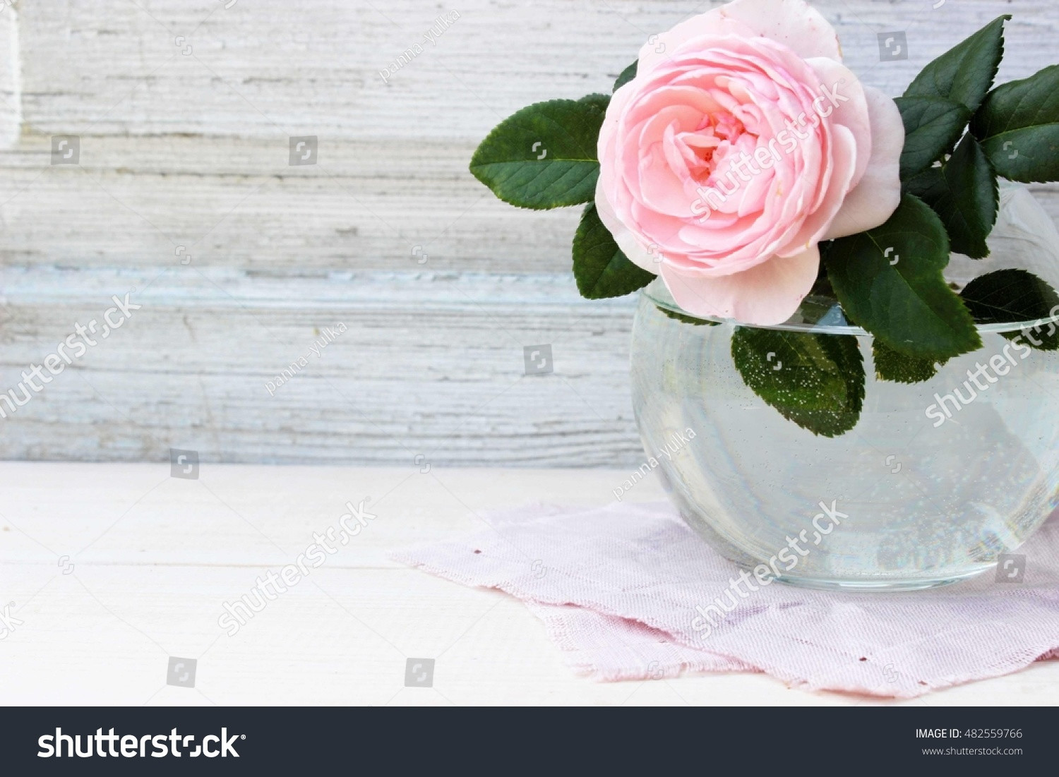 single flower glass vase of royalty free single flower of pink rose in round 482559766 stock throughout single flower of pink rose in round glass vase on old white wooden background floral