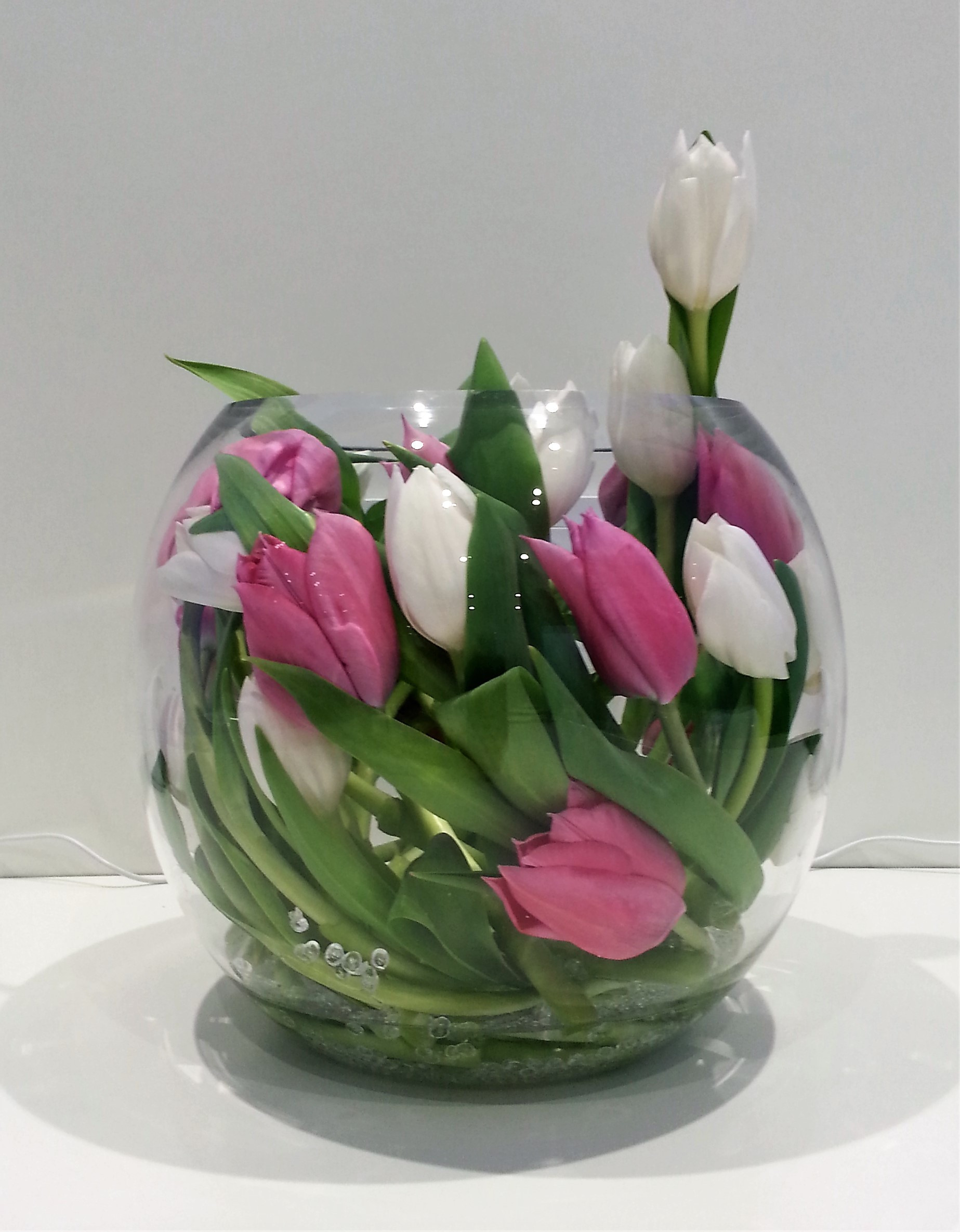 single flower vase bulk of best of wholesale flowers las vegas greengarden regarding 16pv white pink tulip encased in gold fish bowl with clear beads