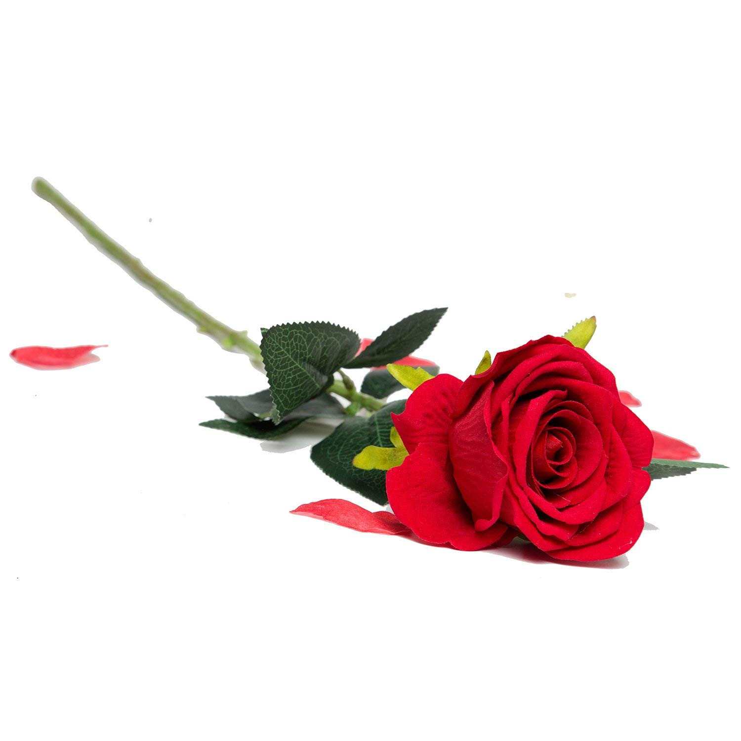 Single Rose Glass Vase Of Amazon Com Artificial Silk Roses Red Velvet 30 Long Stemmed 1 Pertaining to Amazon Com Artificial Silk Roses Red Velvet 30 Long Stemmed 1 Dozen Fake Flowers for Bouquets Weddings Valentines by Royal Imports Home Kitchen