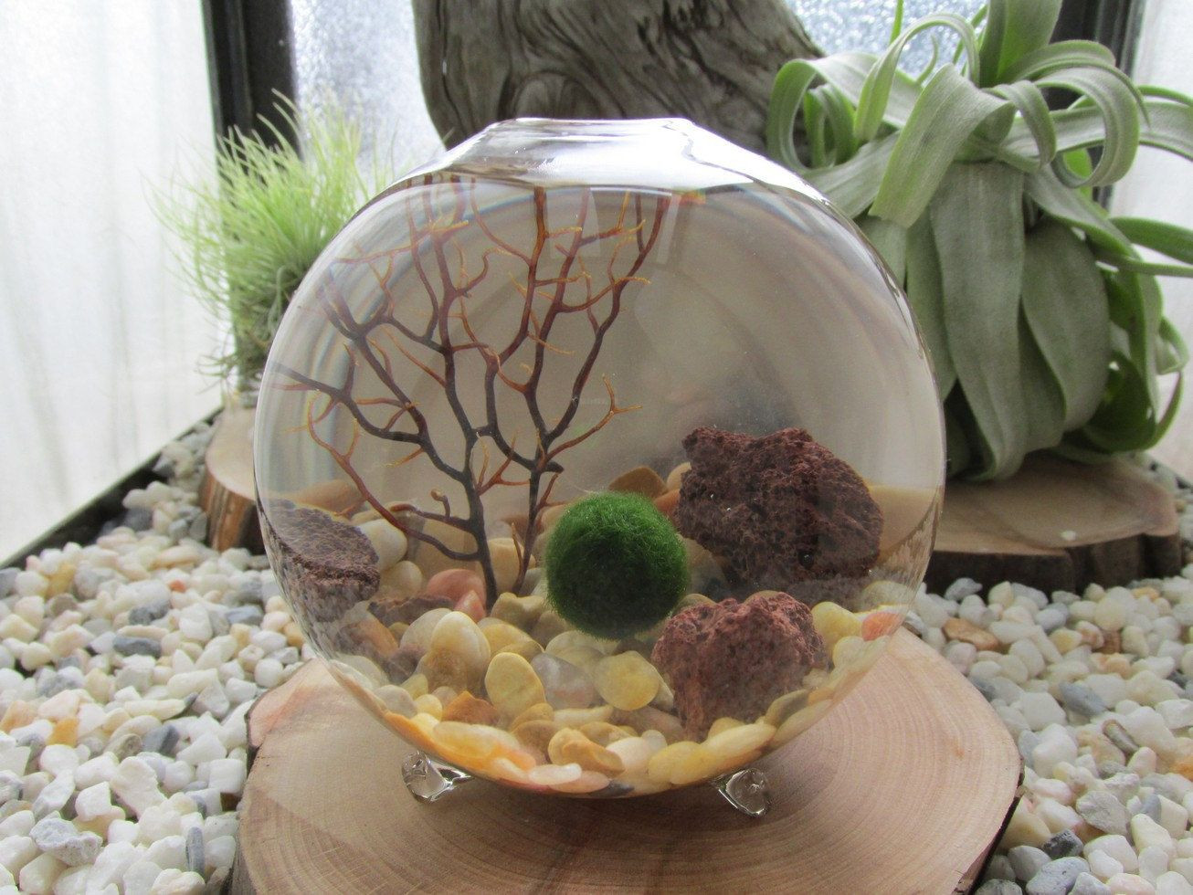 small decorative stones for vases of marimo terrarium kit miniature terrarium with living japanese moss inside marimo terrarium kit by midnight blossom miniature terrarium with living japanese moss ball small footed vase with pebbles and sea fan 26 50 usd by
