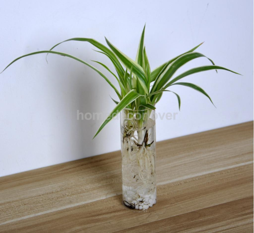 small glass bottle vases of cylinder clear glass wall hanging vase bottle for plant flower intended for cylinder clear glass wall hanging vase bottle for plant flower decorations in vases from home garden on aliexpress com alibaba group