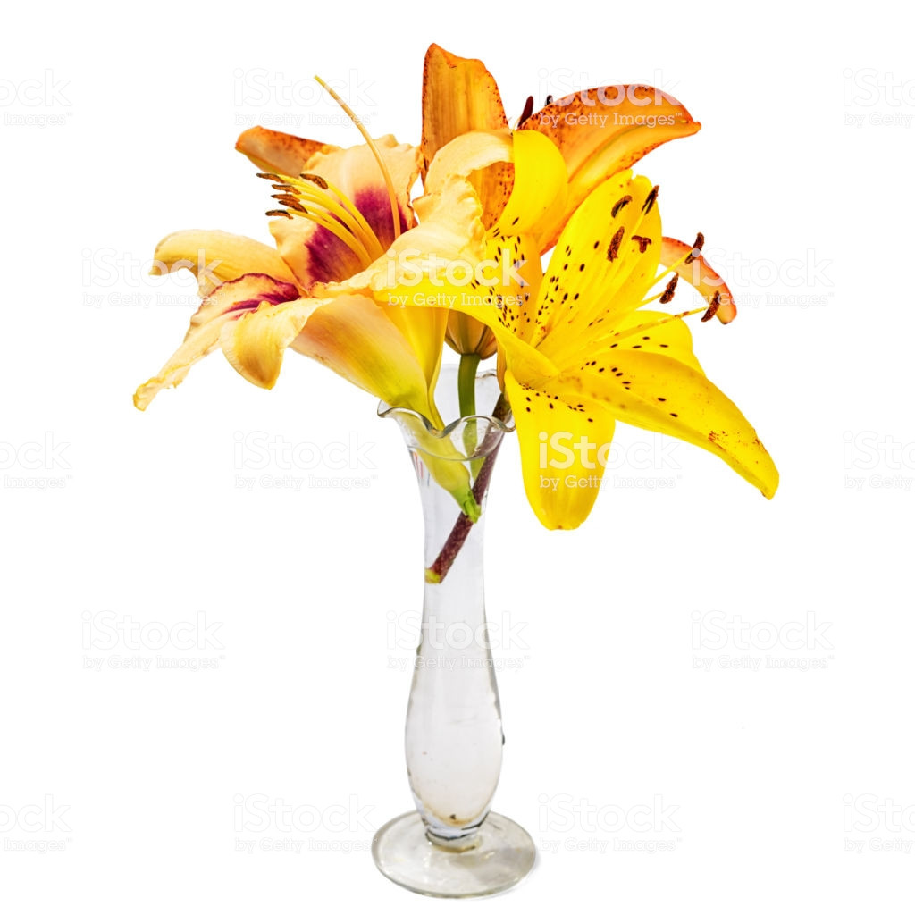 small glass vase with flowers of bouquet with lily flowers in a small transparent glass vase isolated regarding bouquet with lily flowers in a small transparent glass vase isolated on white background royalty