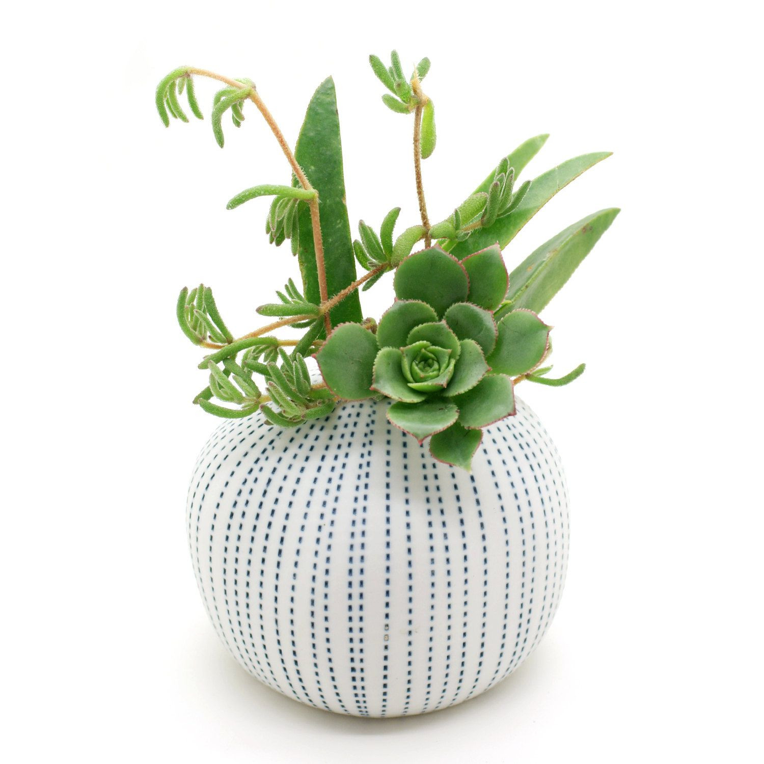 small white vase of porcelain vase pots flower pots cactus small plants succulents pertaining to porcelain vase pots flower pots cactus small plants succulents