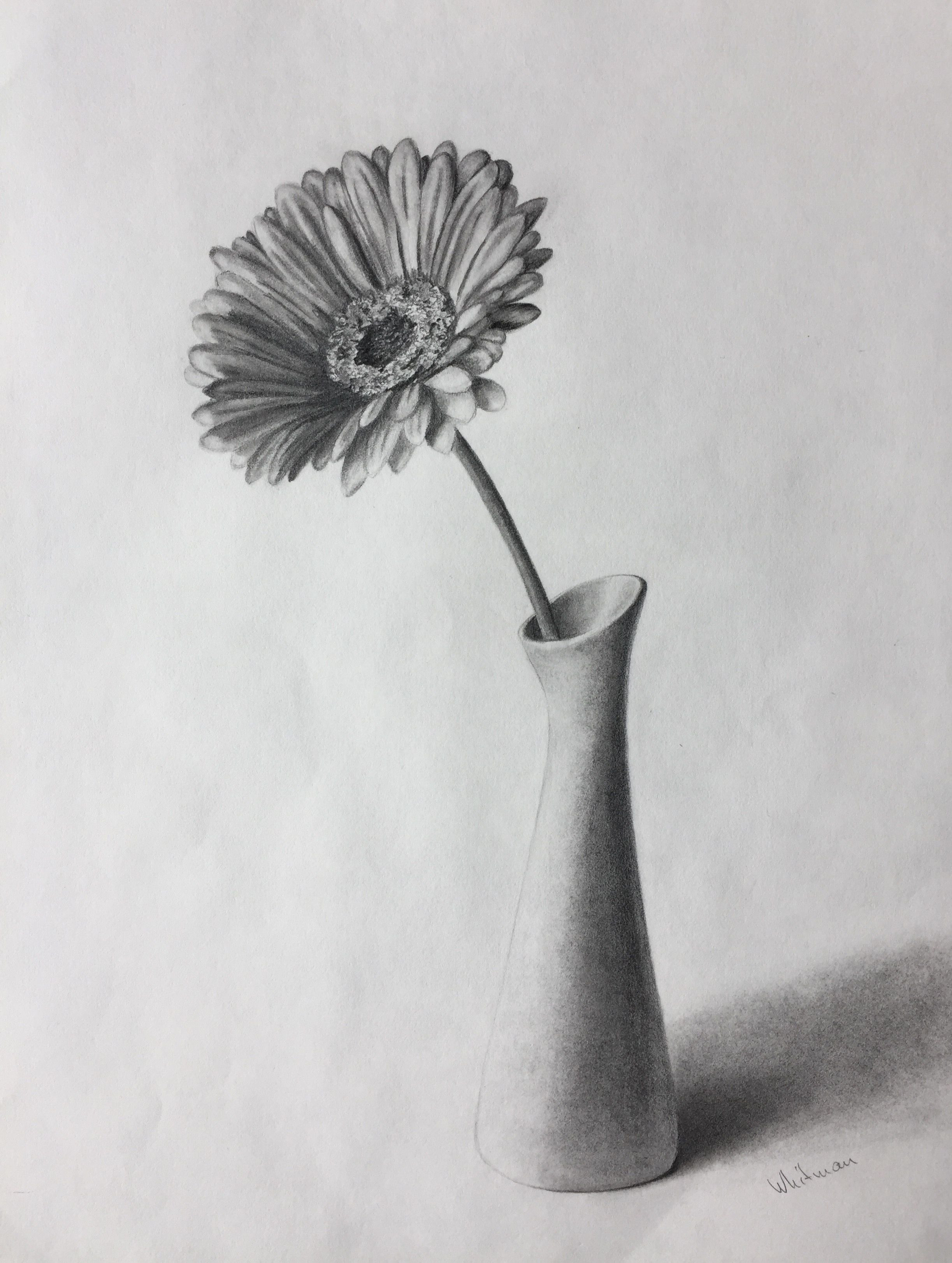 still life flowers in a vase of pencil sketch simple flower vase 80 gerbera flower in a vase still regarding pencil sketch simple flower vase 80 gerbera flower in a vase still life sketch