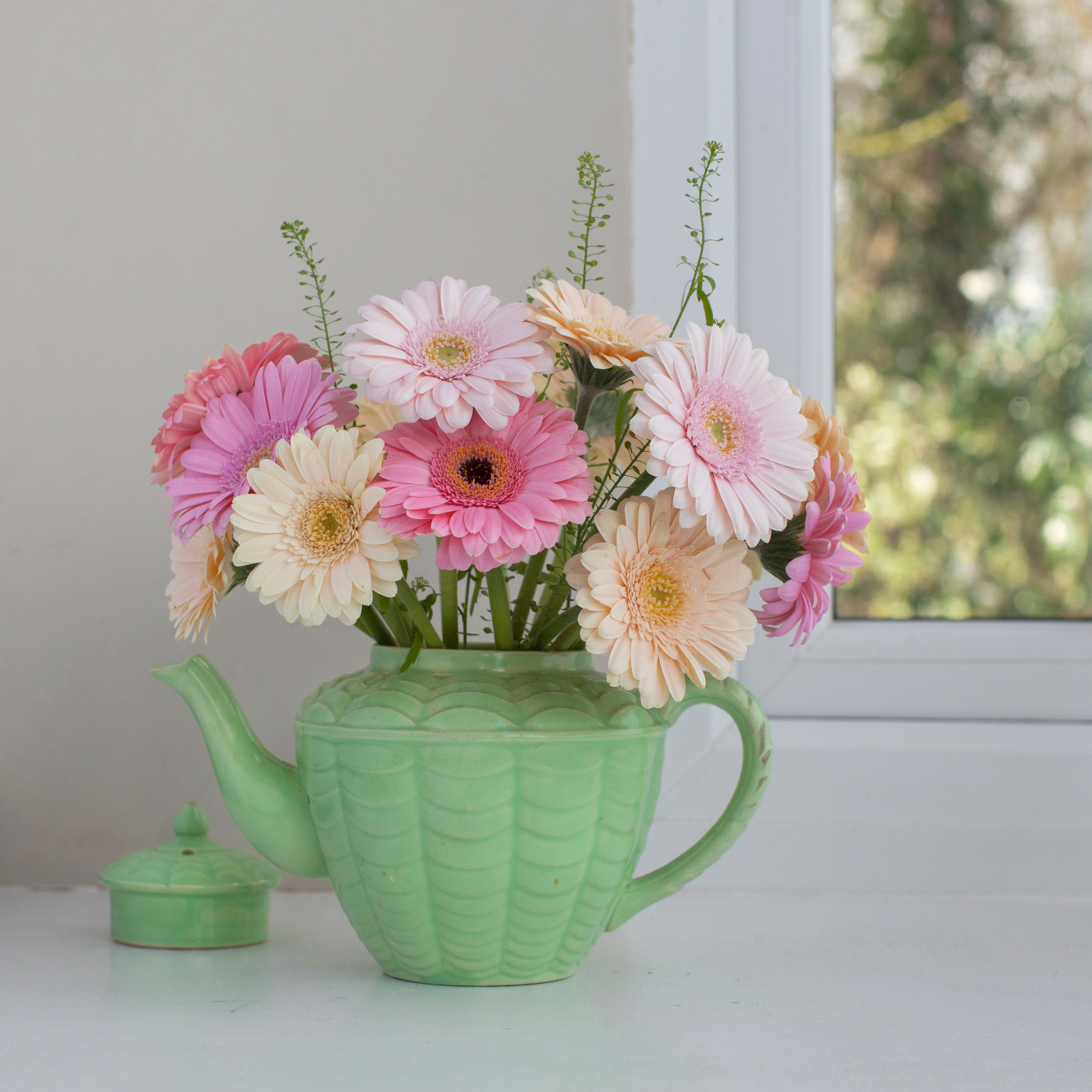 tall skinny vases with flowers of growing gerber daisies yourself intended for gerberadaisy twenty20 70b37b1a e91b 4687 8bf7 5ef6e768f937 58e63fc15f9b58ef7e7ff4f9