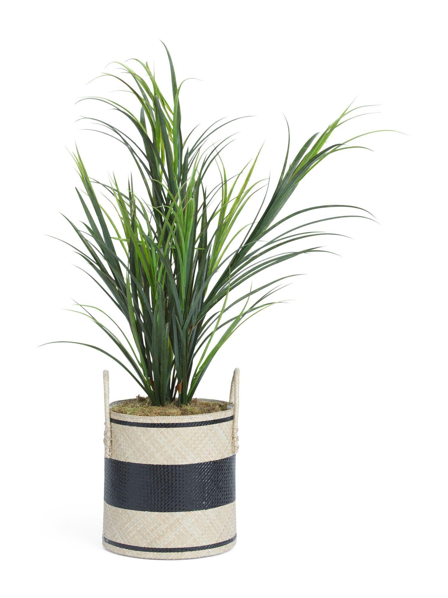 tj maxx vases of dracena grass plant products pinterest grasses plants and in 55in dracena grass plant artificial plants t j maxx