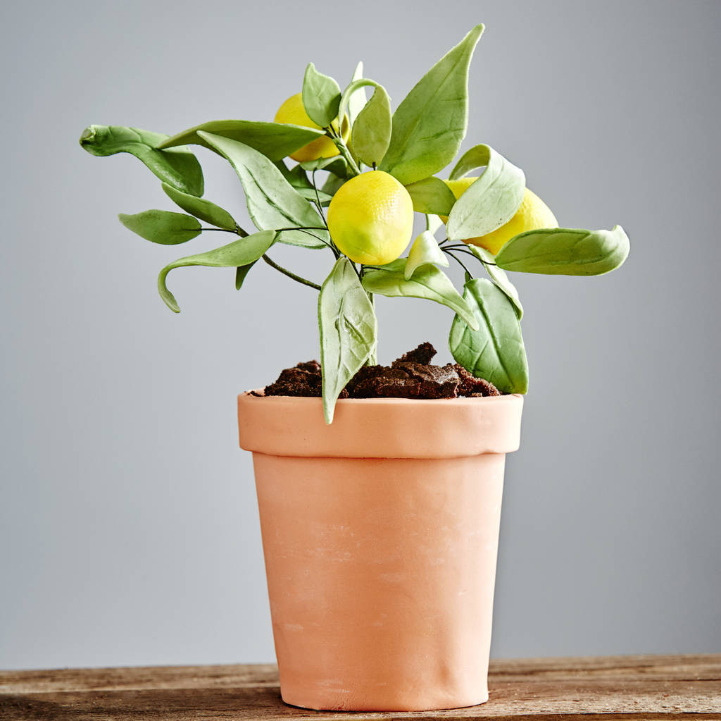 Treasure Craft Vase Of Cakes and Cupcakes Notonthehighstreet Com Intended for Edible Lemon Tree Cake