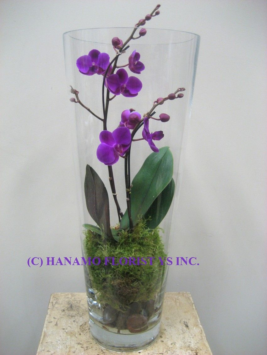 vanda orchid glass vase method of orch014 orchid in the tall glass vase home decor pinterest intended for orch014 orchid in the tall glass vase