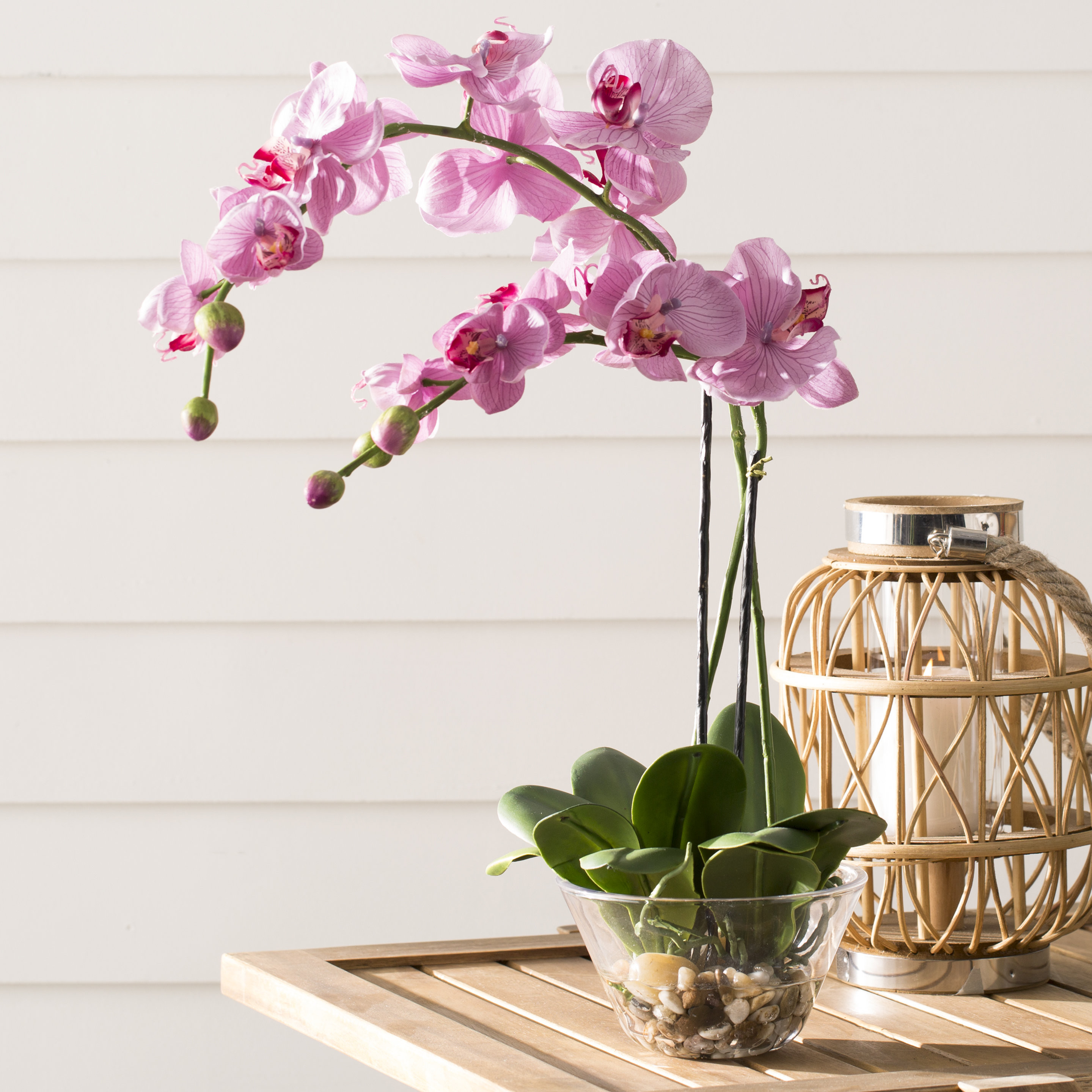vanda orchid glass vase method of world menagerie orchid with glass vase reviews wayfair throughout orchid with glass vase