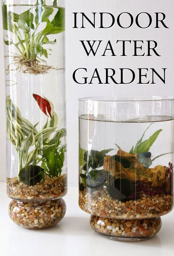vase fish tank of 50 fascinating diy indoor aquaponics fish tank ideas flowers pertaining to 50 fascinating diy indoor aquaponics fish tank ideas