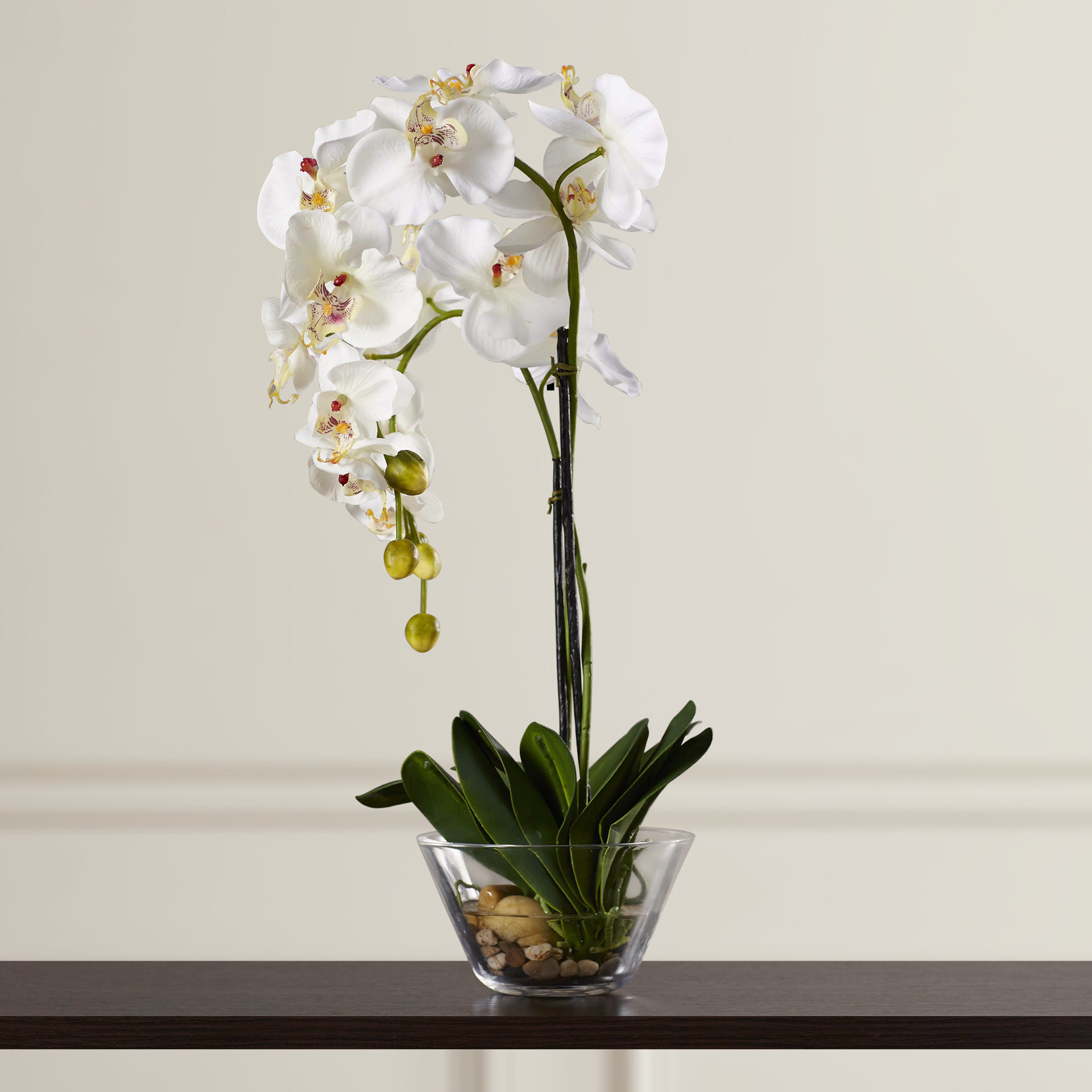 Vase for Long Stem Flowers Of Three Posts Phalaenopsis Silk White orchid In Glass Vase Reviews for Three Posts Phalaenopsis Silk White orchid In Glass Vase Reviews Wayfair