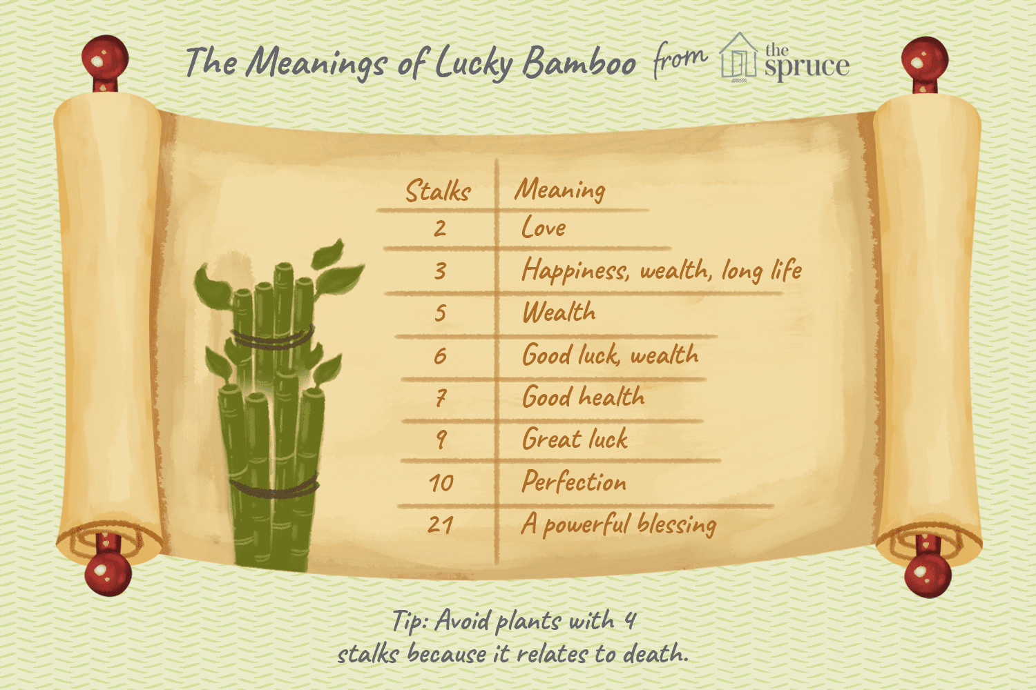 vase for lucky bamboo plant of growing and caring for lucky bamboo pertaining to caring for lucky bamboo plants
