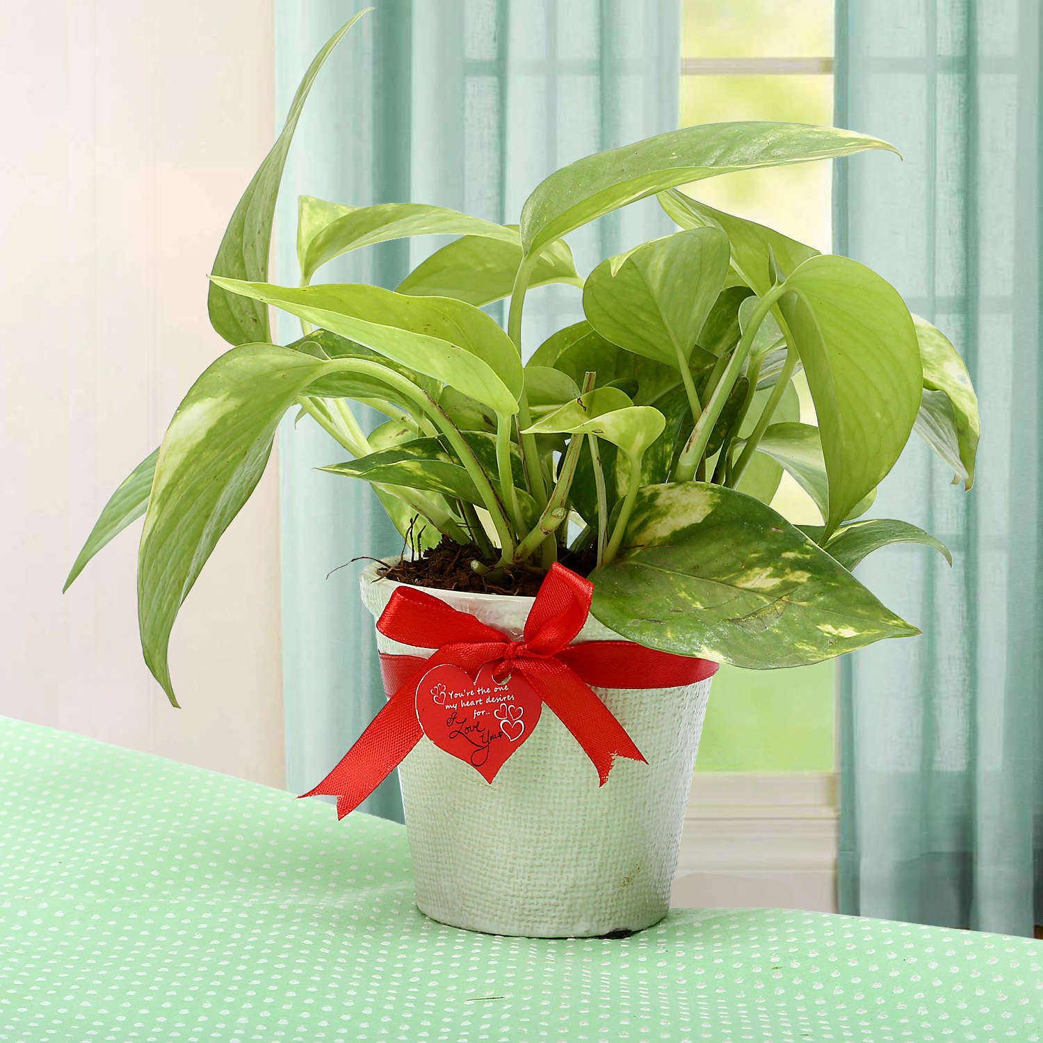 vase for lucky bamboo plant of order send flowers online send flowers to india inside grab the luck money plant799buy now