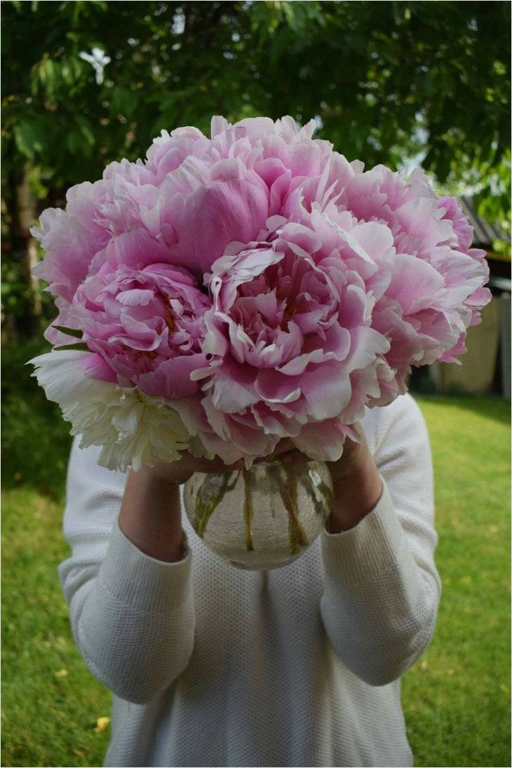 vase of peonies of famous ideas on peonies in vase for interior design or blueprint in fresh ideas on peonies in vase for use decorating living room niche this is so amazingly peonies in vase decor ideas you can copy for architecture interior