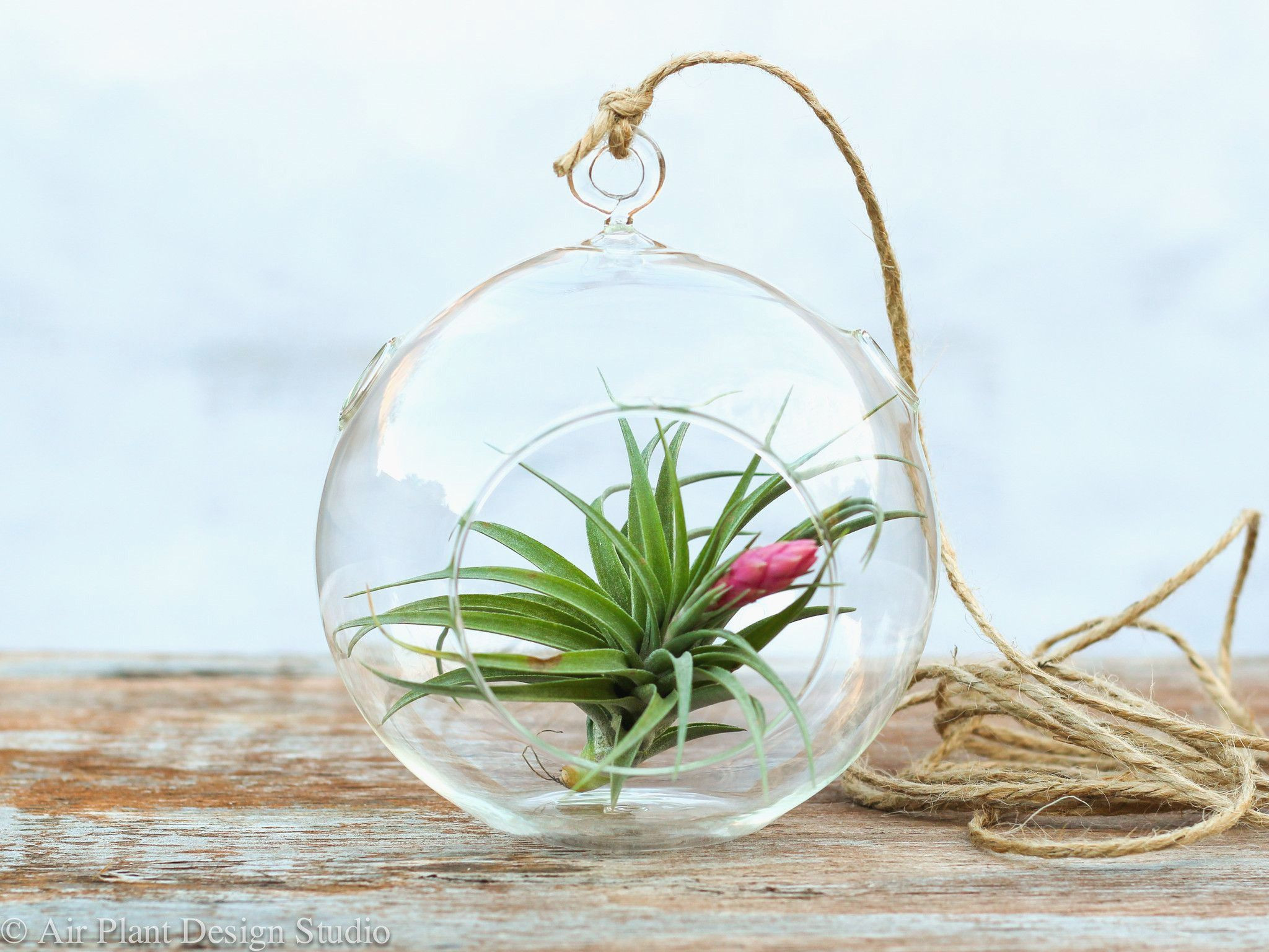 vase painting kit of 25 air plant vase the weekly world in flower gorgeous hanging air plant kit hanging air plant terrarium