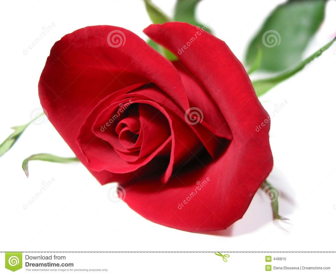 vase with red roses of red and white rose photos luxury luxury lsa flower colour bud vase throughout red and white rose photos fresh red rose flower wallpapers inspirational https s media cache ak0
