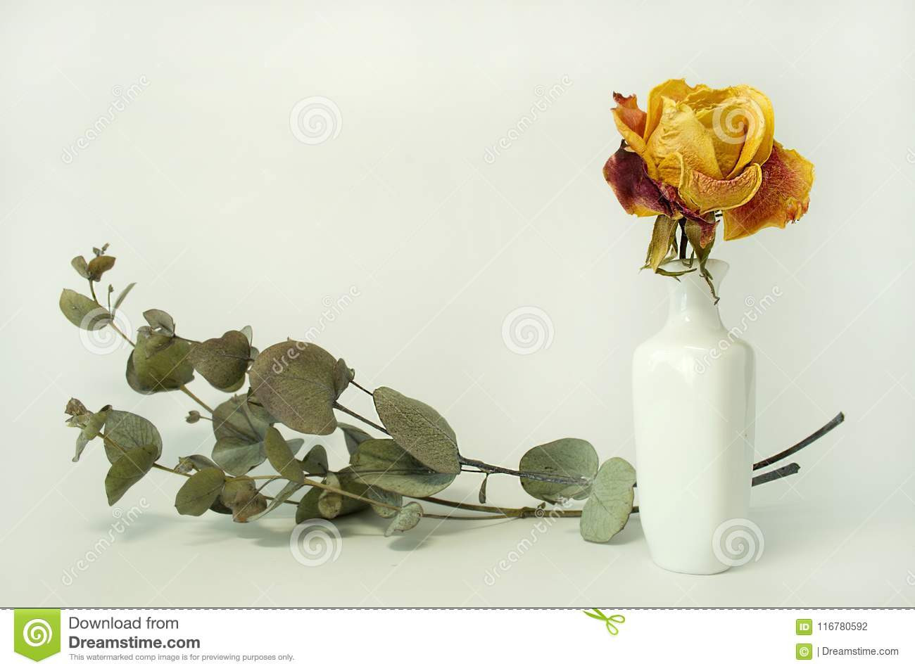Vintage Milk Glass Bud Vase Of Rose In A Vase Stock Photo Image Of Beautiful Flower 116780592 with Regard to Download Rose In A Vase Stock Photo Image Of Beautiful Flower 116780592