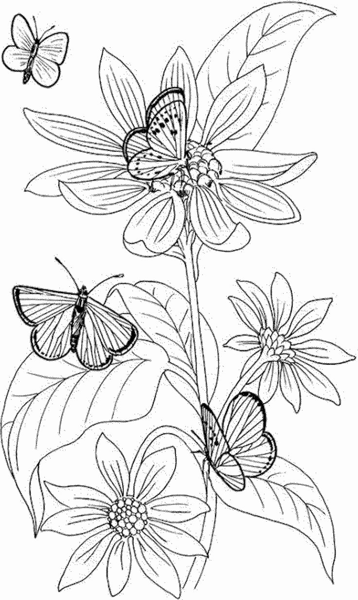 Vw Flower Vase Of Coloring Book Of Flowers Free Collection Throughout Fresh Coloring Book Pages Lovely Cool Vases Flower Vase Coloring Page