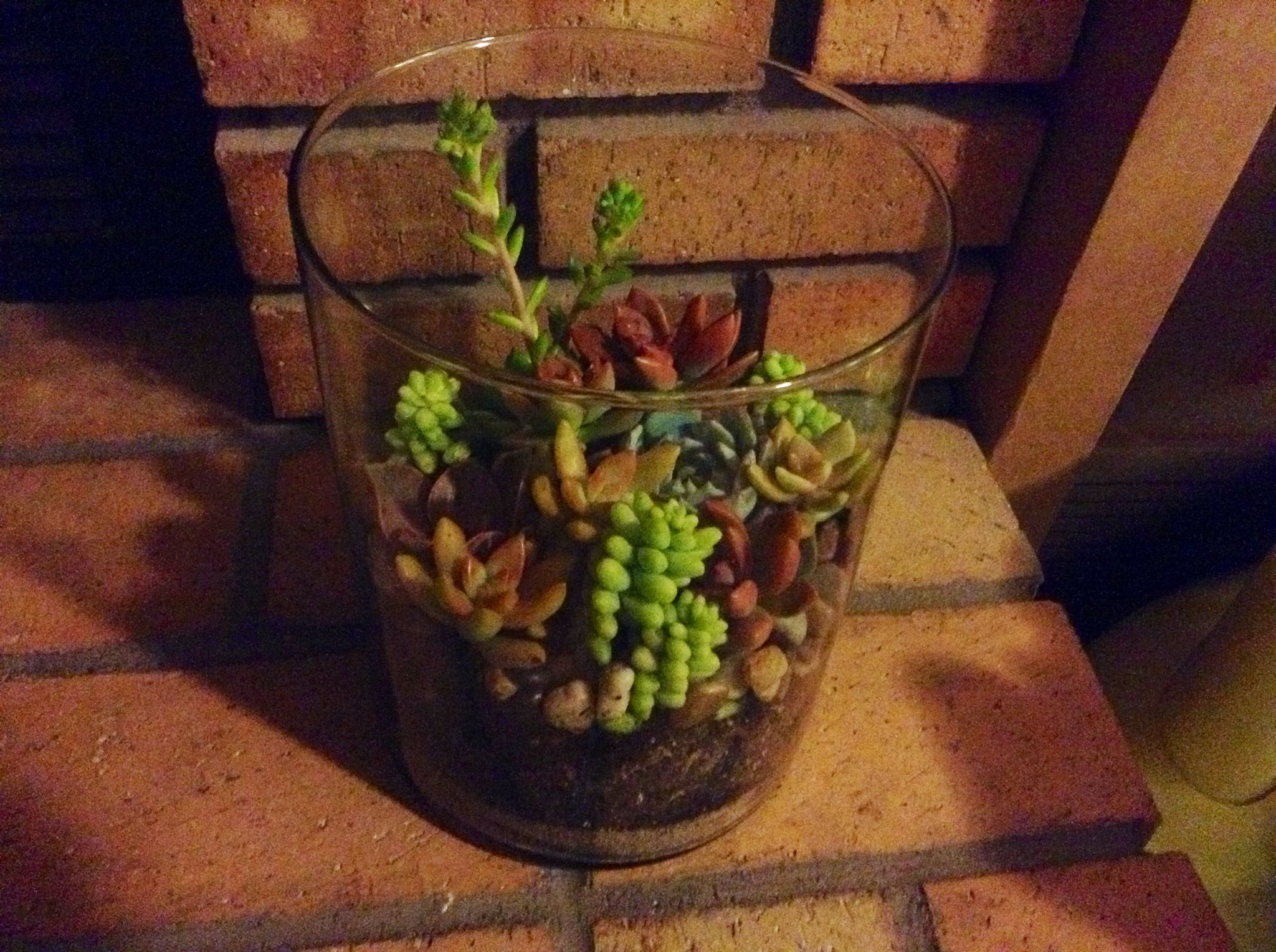 walmart square glass vases of walmart succulents 8 plants and garden pinterest succulents for walmart succulents 8 succulents succulent plants