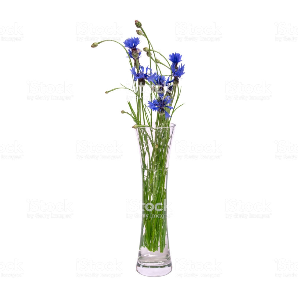 white orchids in glass vase of a bouquet of blue spring flowers in a glass transparent vase is with regard to a bouquet of blue spring flowers in a glass transparent vase is isolated on a white
