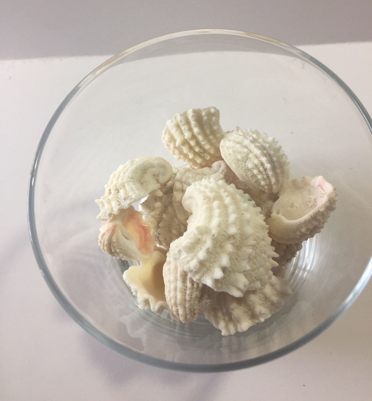 18 Great White Sand Vase Filler