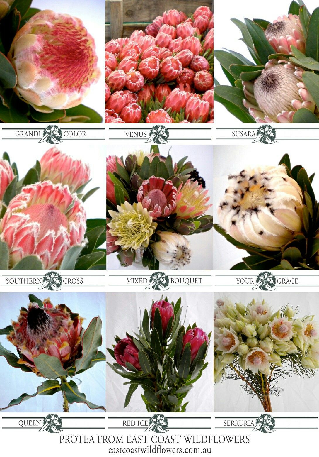 wholesale vases nyc of nine of our most popular protea varieties that we grow and within nine of our most popular protea varieties that we grow and wholesale in nsw capeflora wedding bouquet flowers blushingbride pinkice