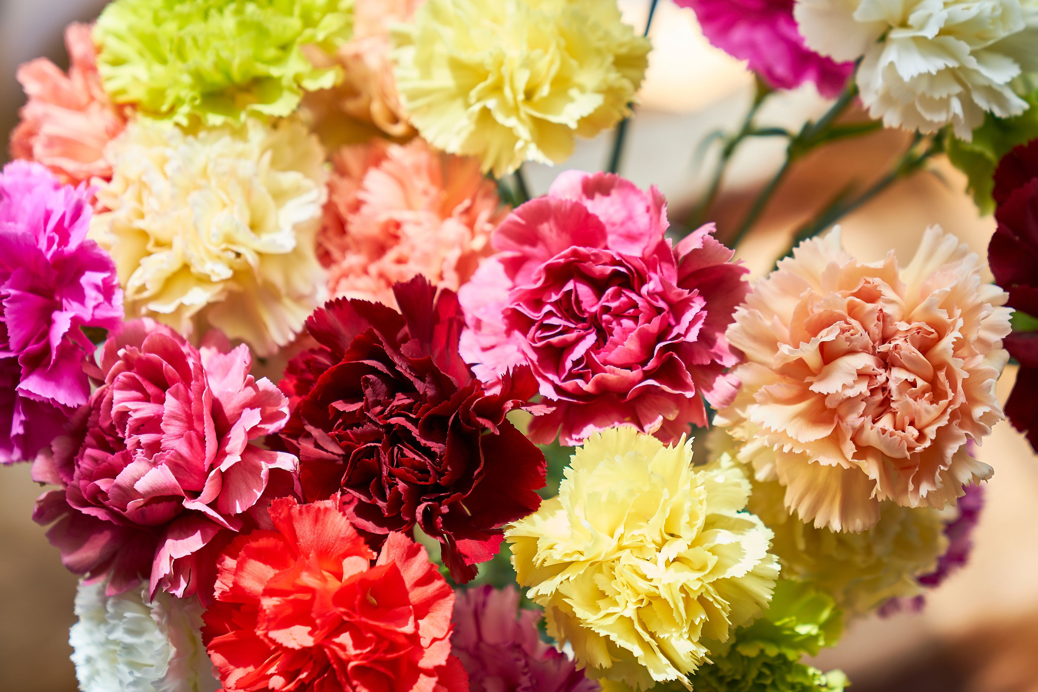 yellow flowers in vase painting of 13 top varieties for cut flowers throughout carnation gettyimages 746096929 59d4fb41845b340011a894c1