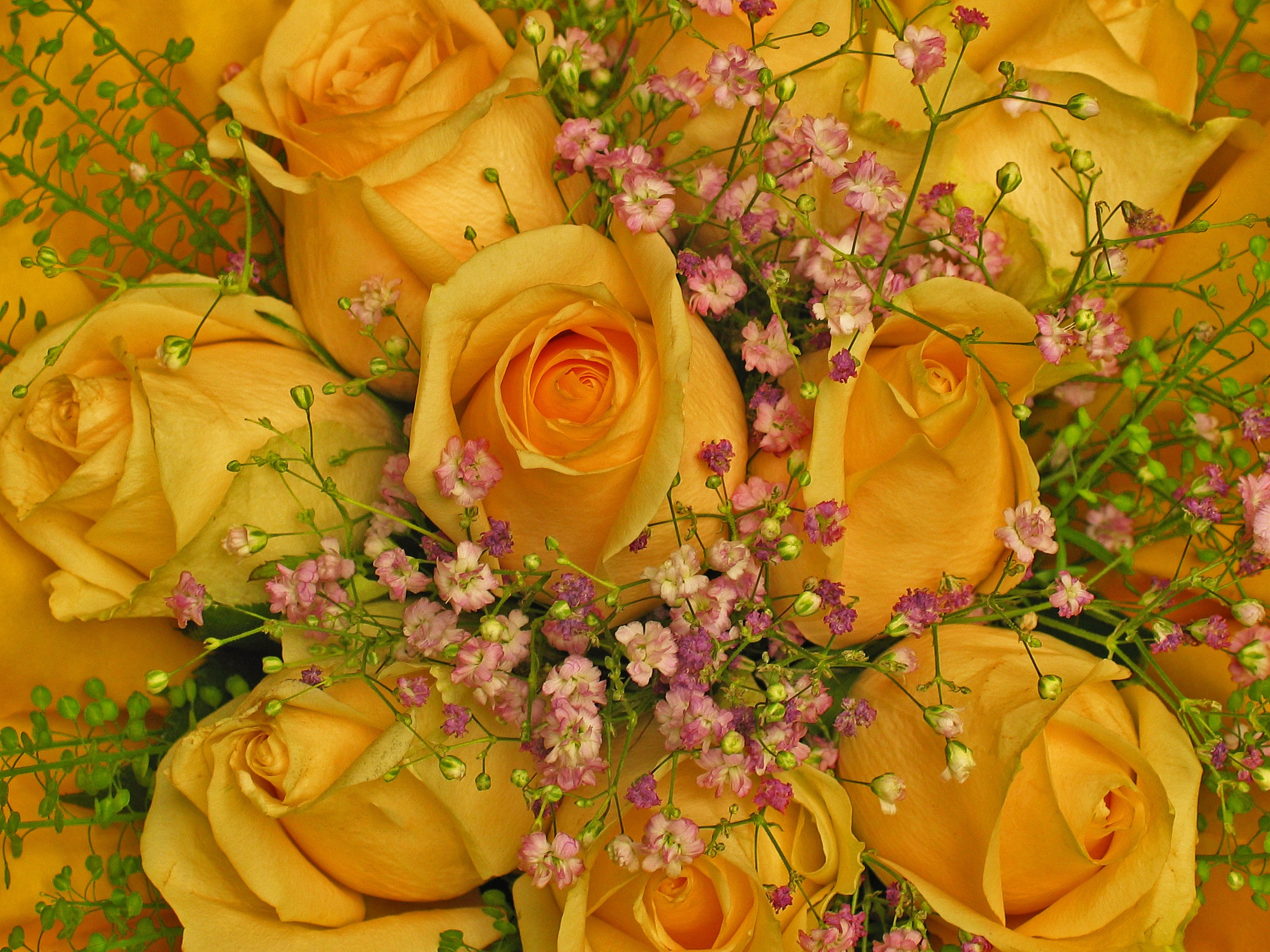 yellow rose vase of free images petal bloom love vase autumn flora florist for free images petal bloom love vase autumn flora florist gypsophila affection background petals beautiful bud floristry congratulate